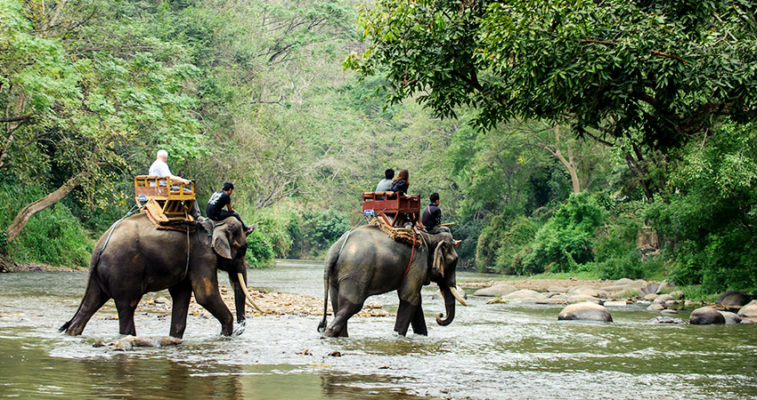 What to do in Corbett Natinal Park